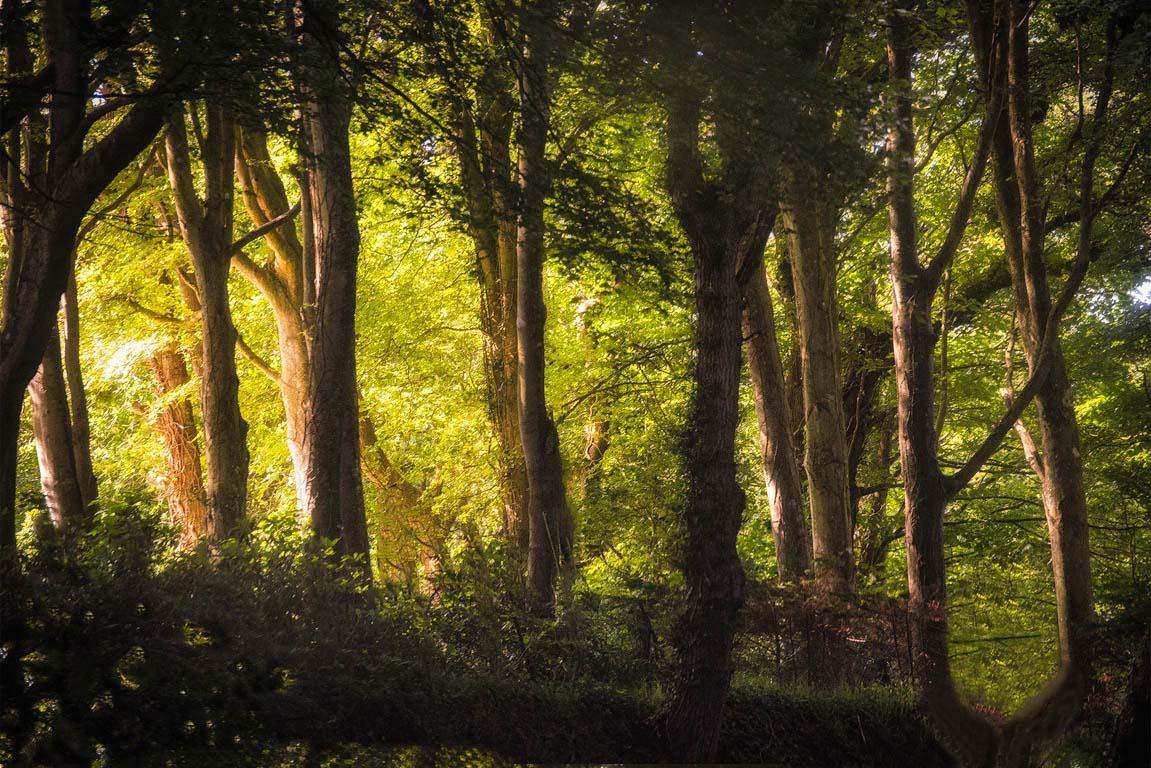 Wald als Hintergrundbild