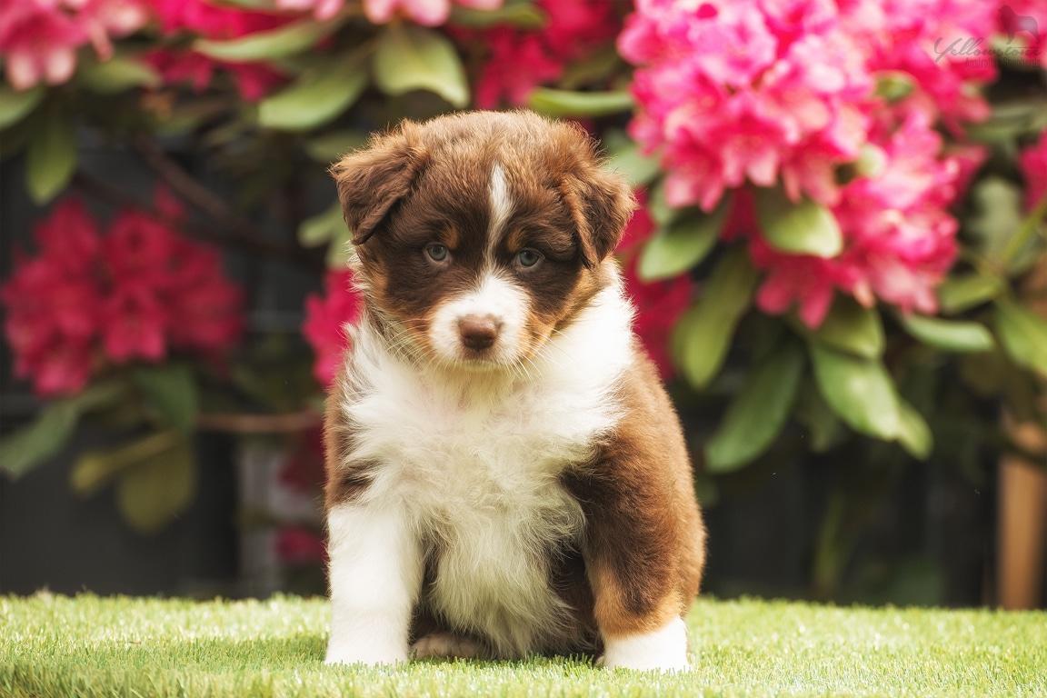 maisy horatio june 6 - Ablauf der Hundegeburt