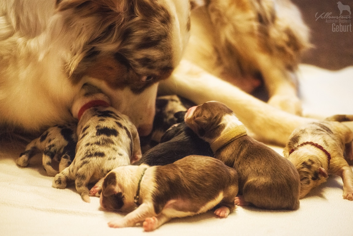 Testwurf Impressionen 1 - Canines Herpesvirus Typ 1