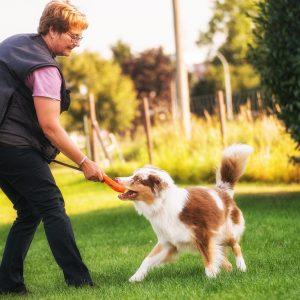 Layla Sammy Welpen Juna beim Training Bild 7 300x300 - Nachzucht Layla & Sammy