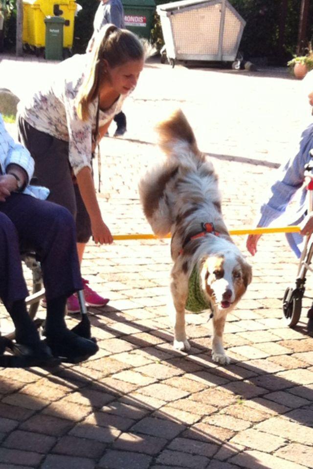 unknown 7 - Einsatz als Therapiehund