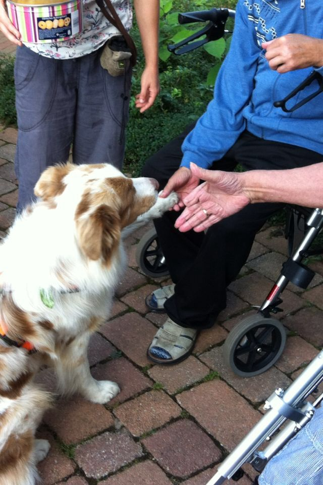unknown 8 - Einsatz als Therapiehund