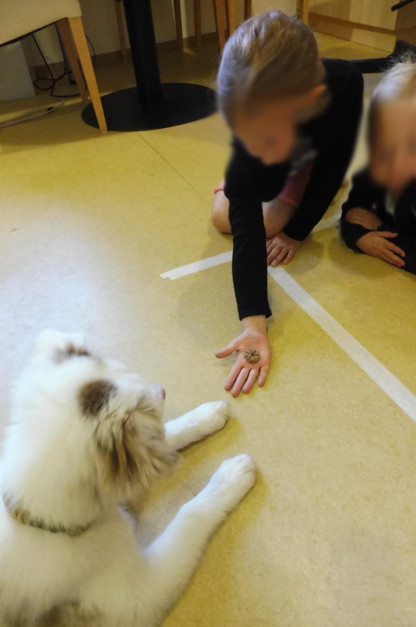 1 - Einsatz als Therapiehund