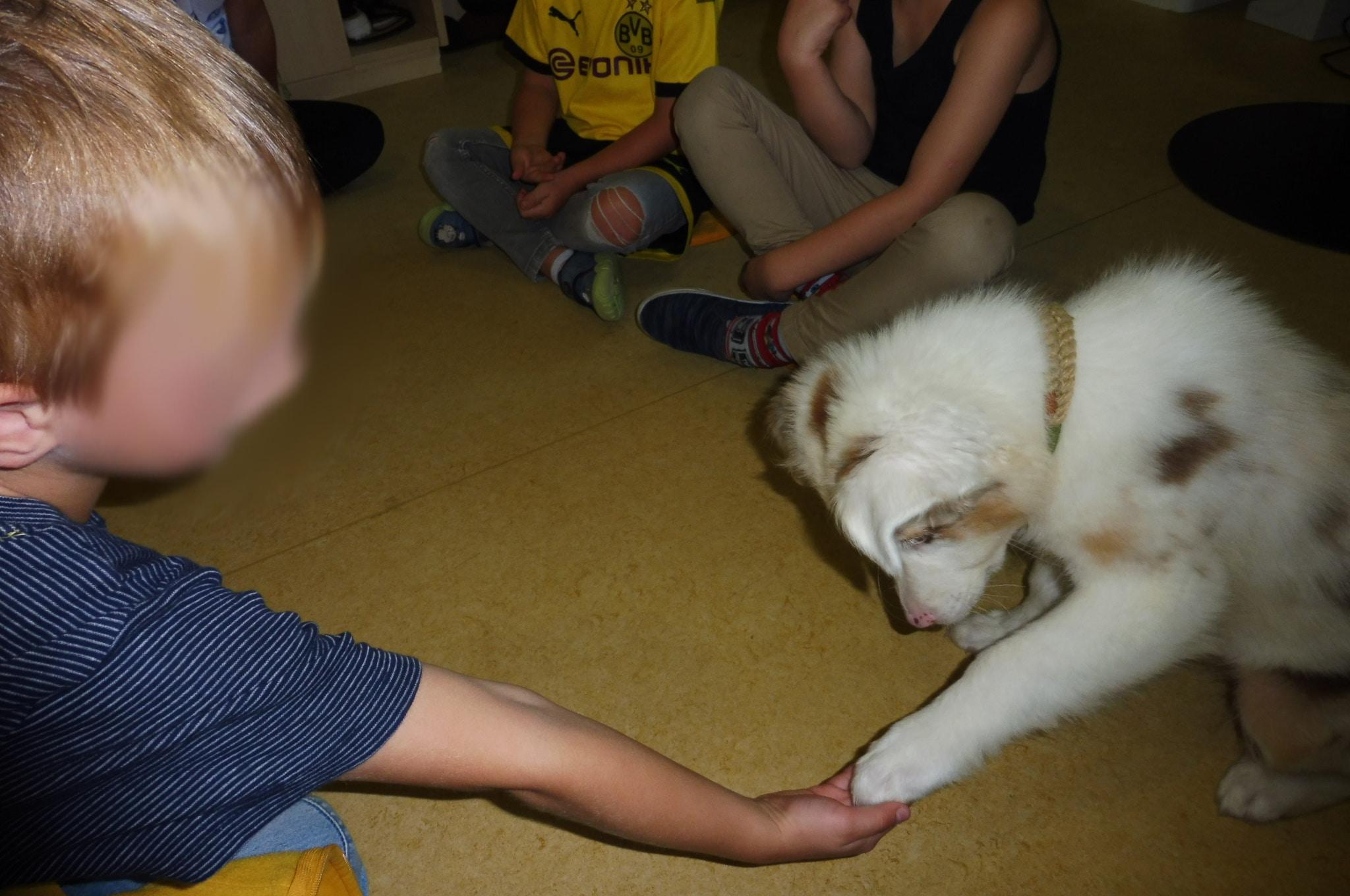 2 - Einsatz als Therapiehund