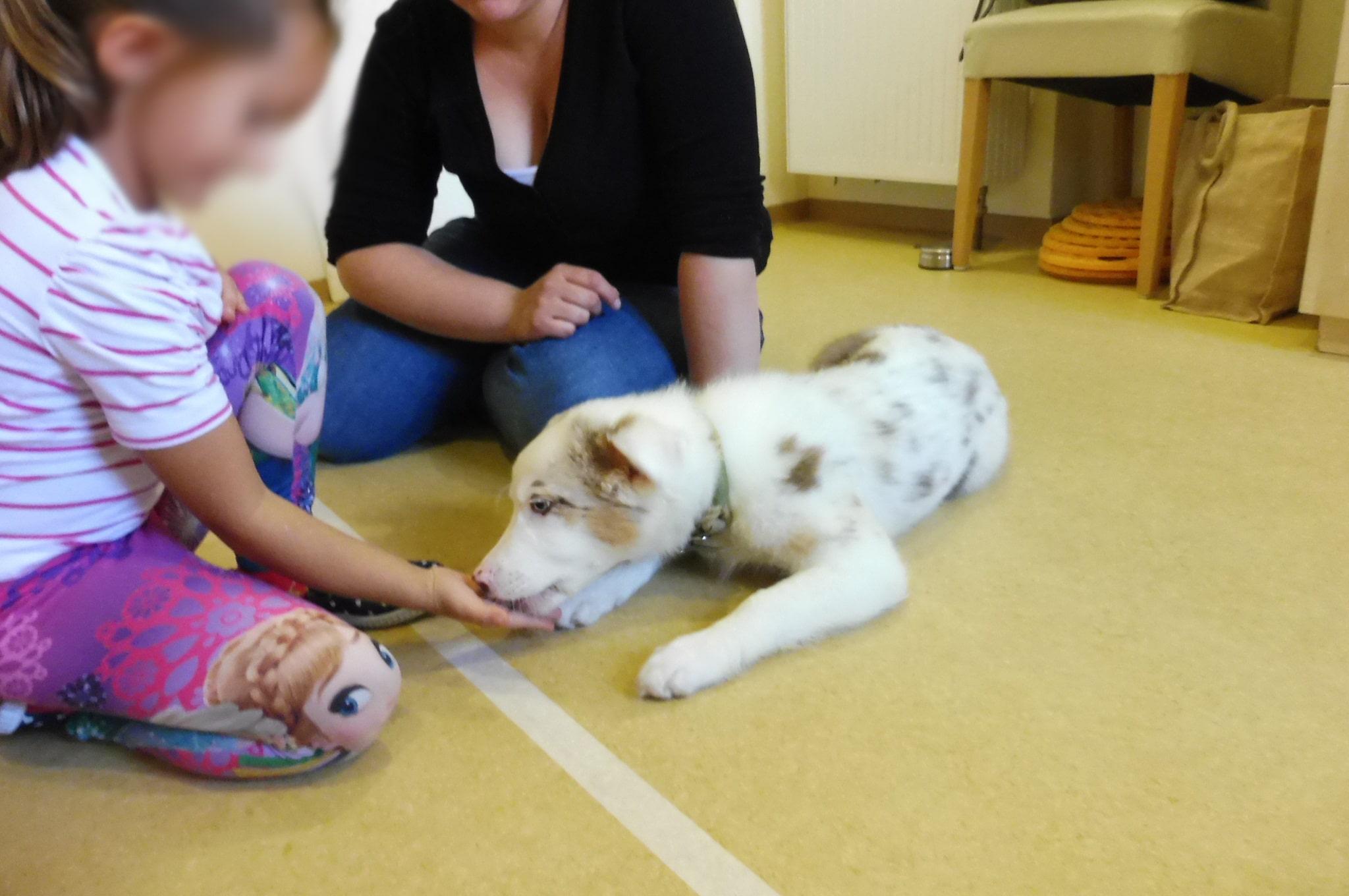 3 - Einsatz als Therapiehund