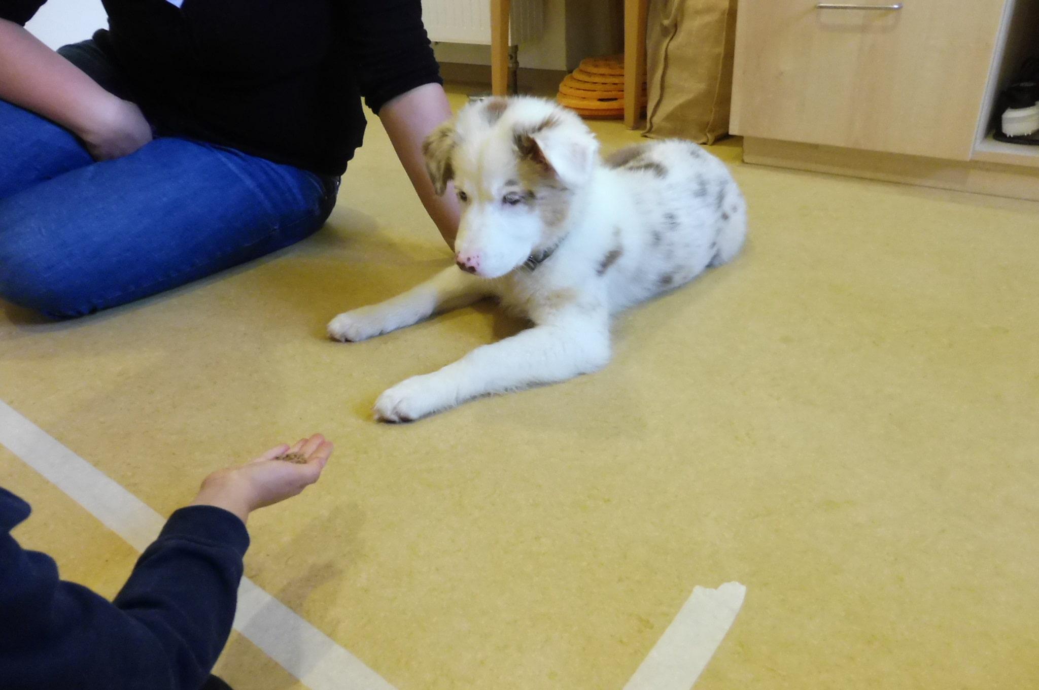 4 - Einsatz als Therapiehund