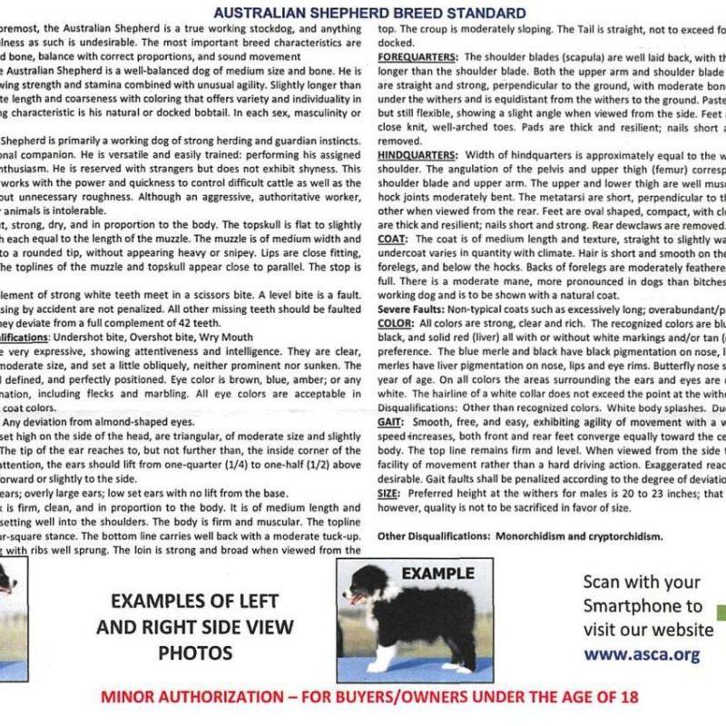 asca registrierung rueckseite fotos 800x800 - ASCA Papier beantragen Anleitung