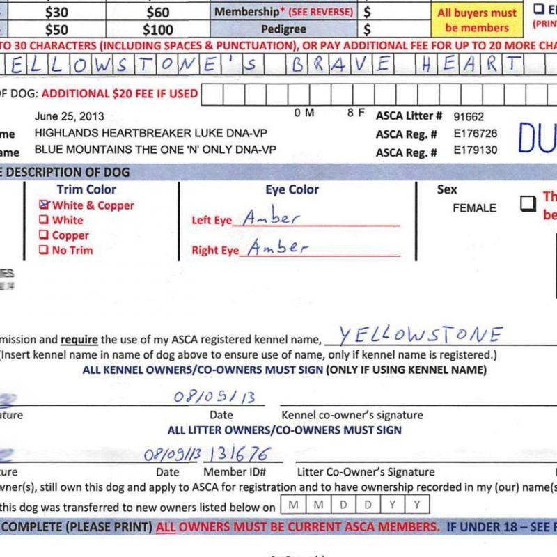 asca registrierung zuechter ausgefuellt 800x800 - ASCA Papier beantragen Anleitung