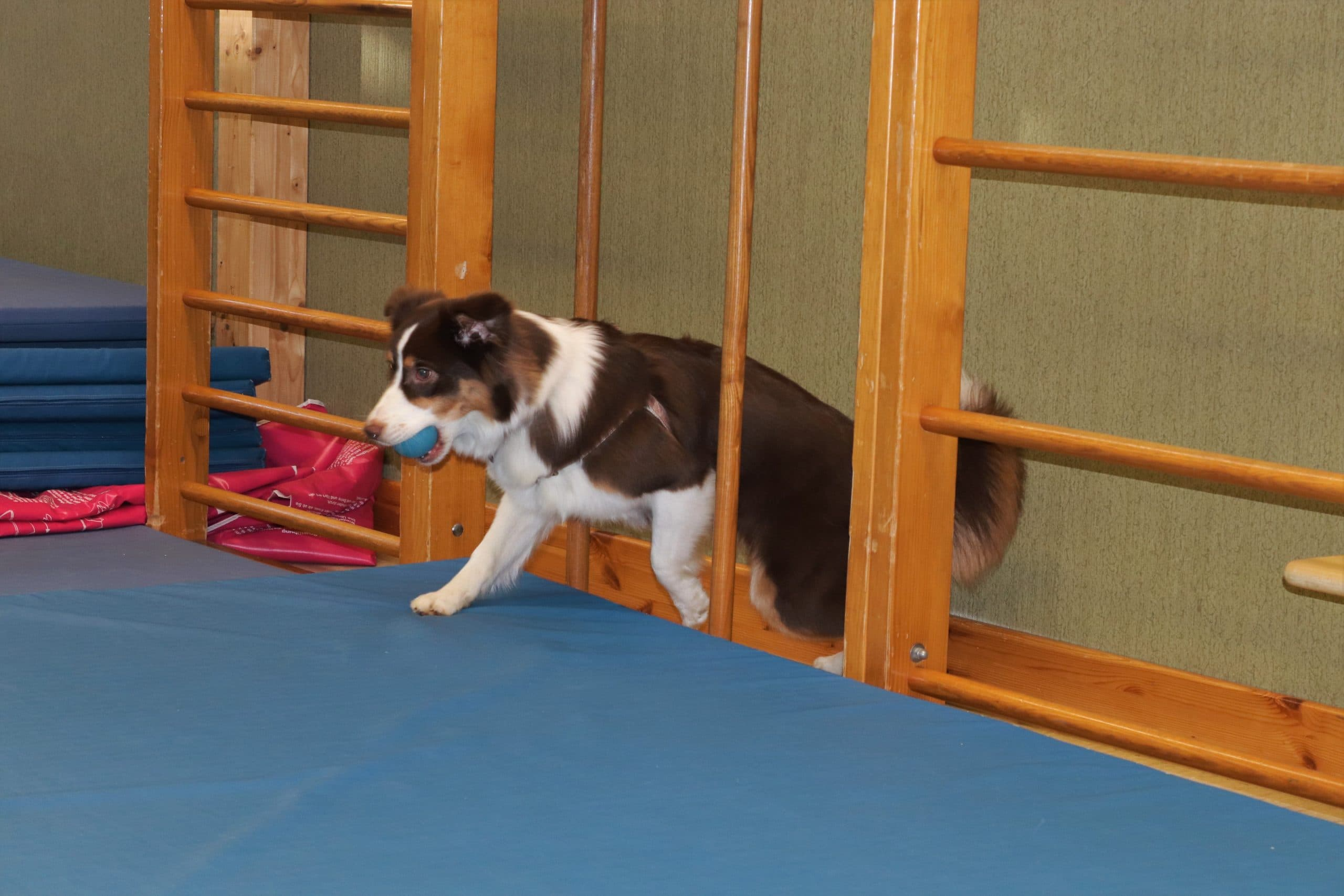 img 6490 2 - Einsatz als Therapiehund