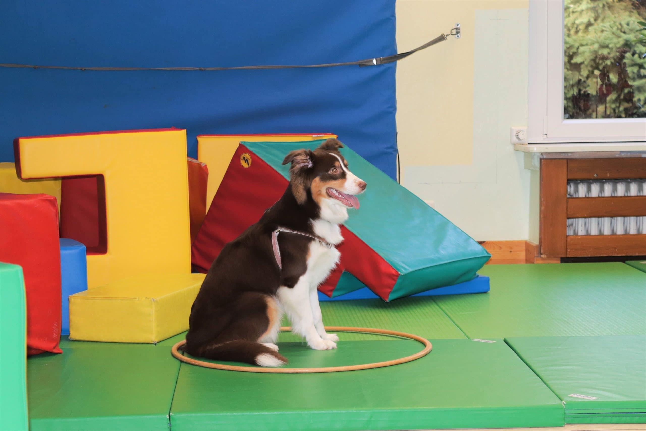 img 6526 2 - Einsatz als Therapiehund