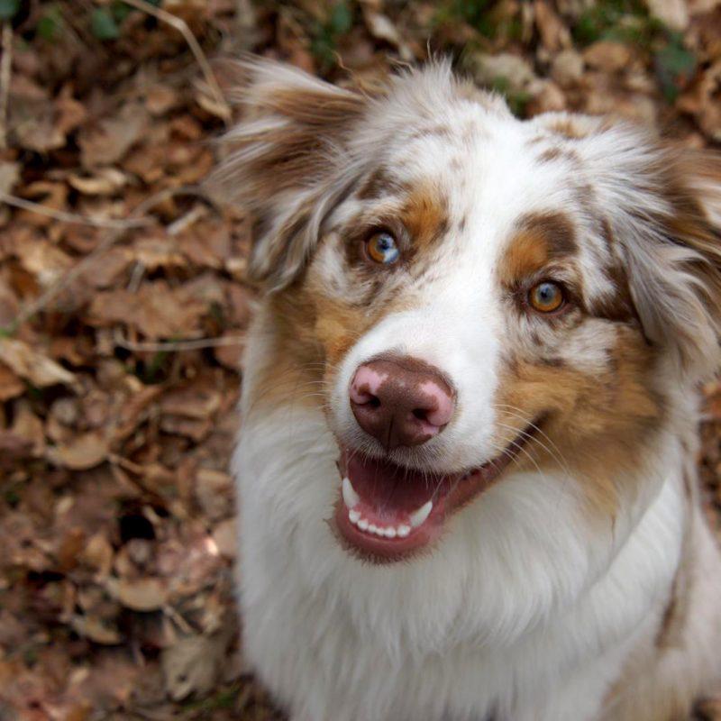 whatsapp image 2021 05 28 at 18.29.50 1 800x800 - Einsatz als Therapiehund