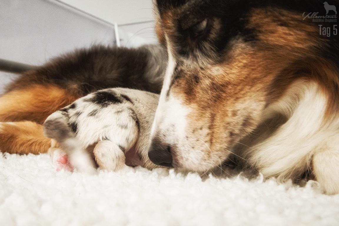 Lulu Atasi Welpen 5 Tage alt Neue Impressionsbilder Bild 4 - Entwicklung des Charakters eines Hundes
