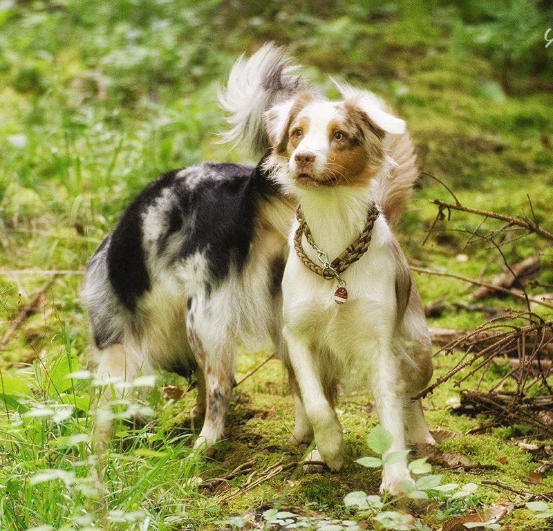 ipad dsc 8429 800x768 - Hundeverhaltensknigge