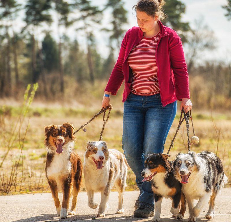 verden wolfcenter 2015 209 800x768 - Hundeverhaltensknigge
