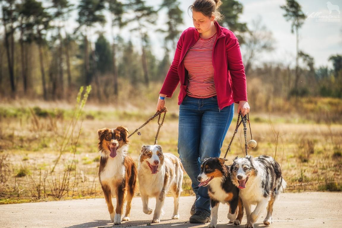 verden wolfcenter 2015 209 - Mehrhundehaltung oder die Aussiesucht