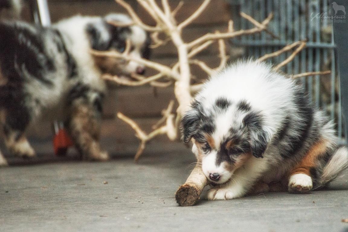 Josie Lennox Welpen Neue Fotos Bild 10 - Entwicklung des Charakters eines Hundes