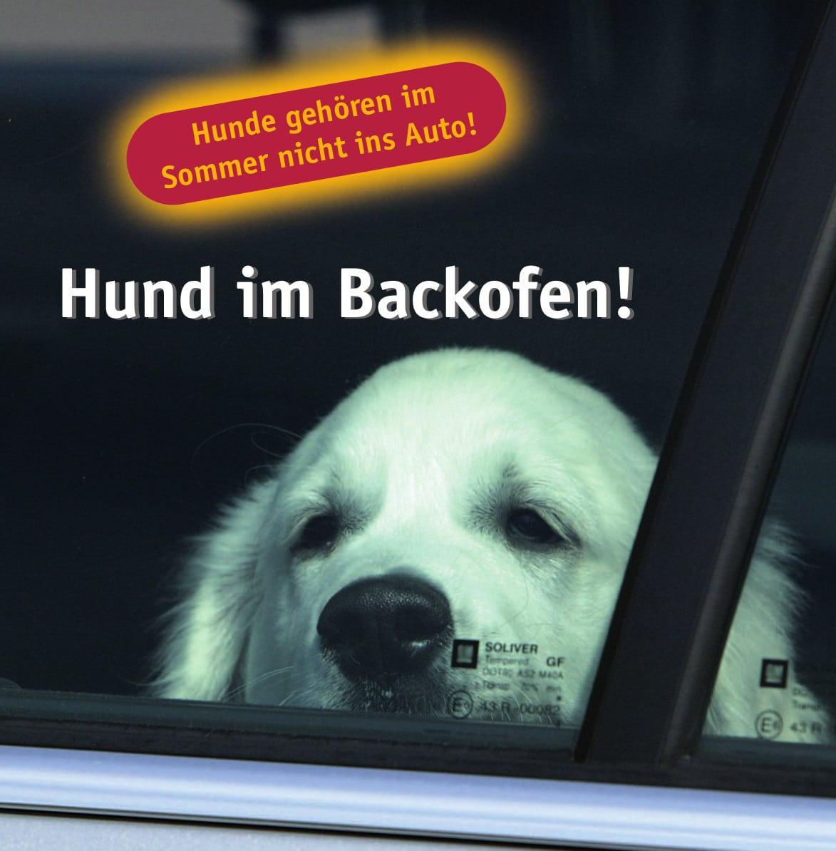 tasso plakat hund im backofen - Hundetabus
