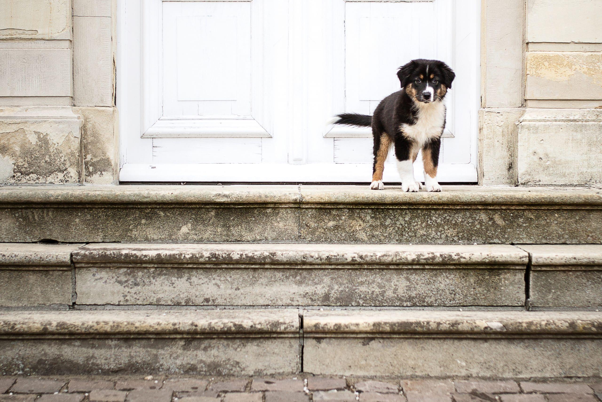 taya treppe - Hundetabus