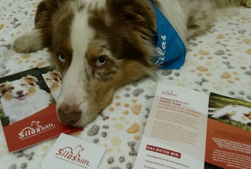 Josie Roy Welpen Silas ist Therapiehund Bild 1 800x540 - Einsatz als Therapiehund