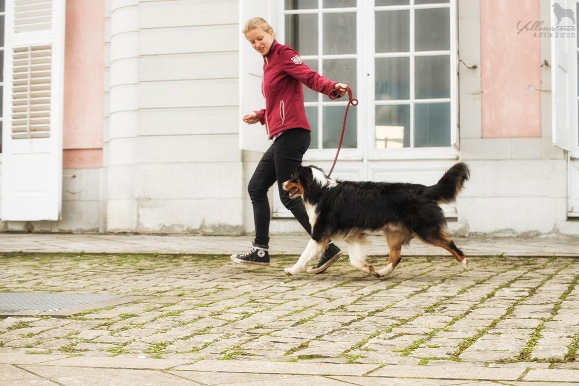 Maisy Atasi Welpen Brego Fotos Bild 3 - Degenerative Myelopathien bei Hunden