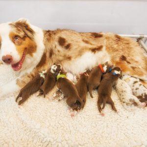 Maisy ist stolze Mutter geworden Bild 4 300x300 - Nachzucht Maisy & Cisco
