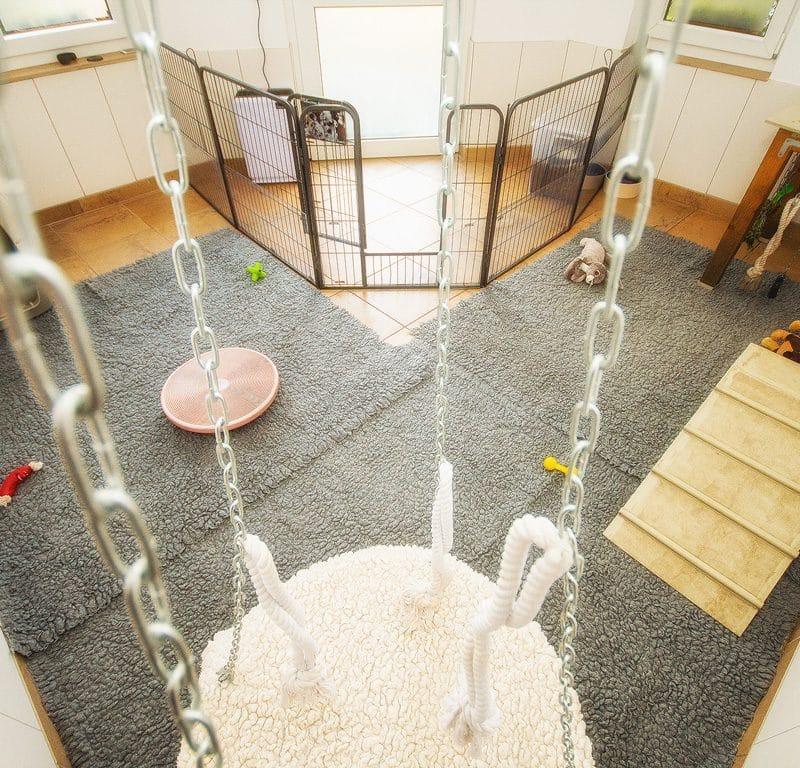 Unser Indoor Welpenauslauf Welpenspielplatz Beitragsbild 800x768 - Unsere Aufzucht