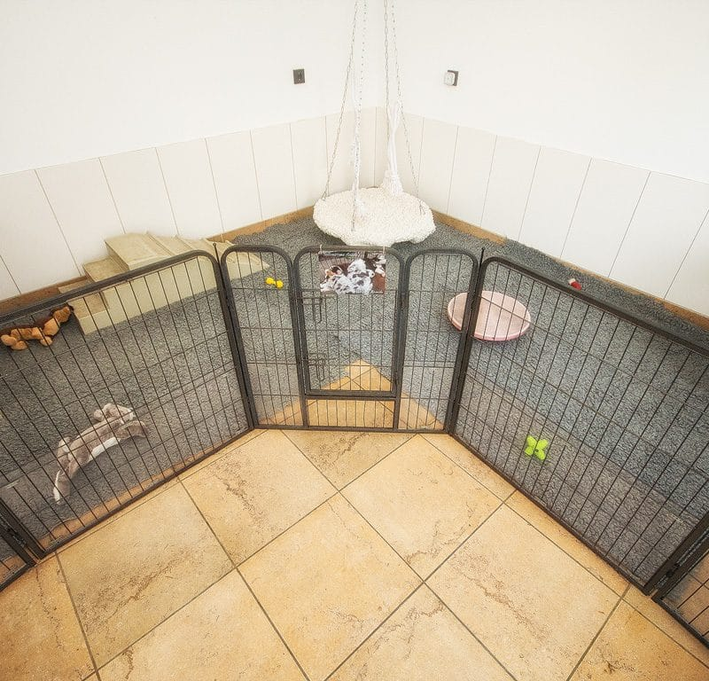 Unser Indoor Welpenauslauf Welpenspielplatz Bild 3 800x768 - Unsere Aufzucht