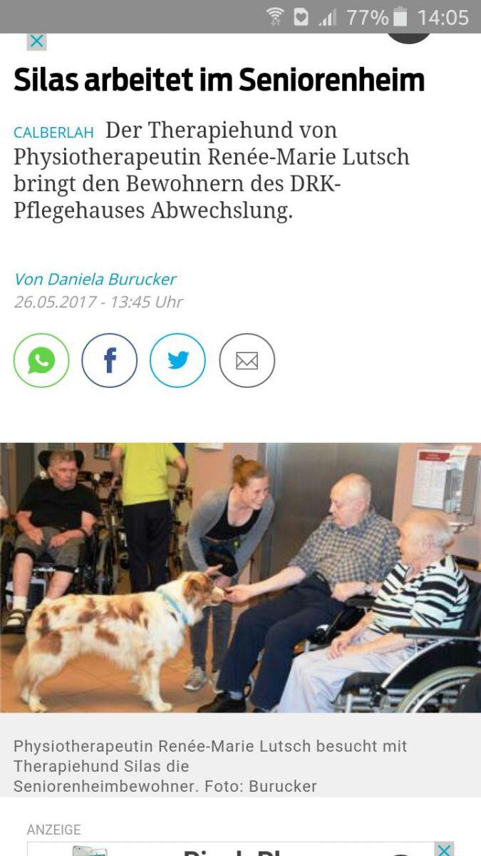 Josie Roy Welpen Therapiehund Silas Bild 1 - Einsatz als Therapiehund