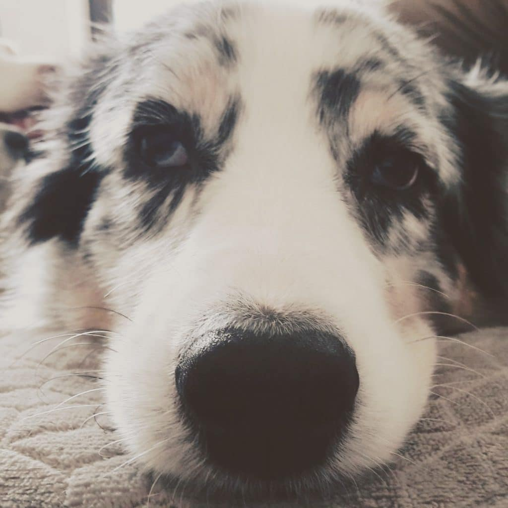 Hundealltag... Beitragsbild 1024x1024 - Infos