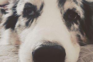Hundealltag... Beitragsbild 300x200 - Infos