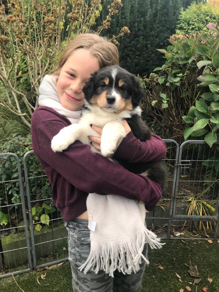 Seven Horatio Welpen Noch Mal Kinder Bild 2 - Einsatz als Therapiehund