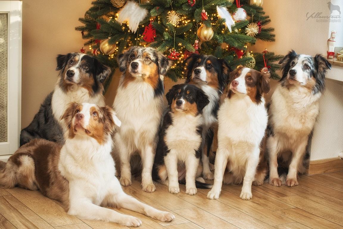 Fröhliche Weihnachten und einen guten Rutsch ins neue Jahr Beitragsbild - Gefahren an Weihnachten