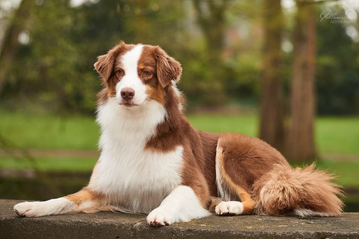Neue Fotos von Maggy Beitragsbild - Auswirkung der Fellfarbe des Hundes auf das Verhalten