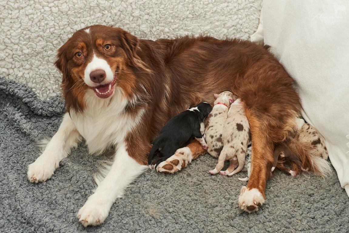 Maxi Sammy Filou Welpen Einzelfotos online Bild 8 - Ablauf der Hundegeburt
