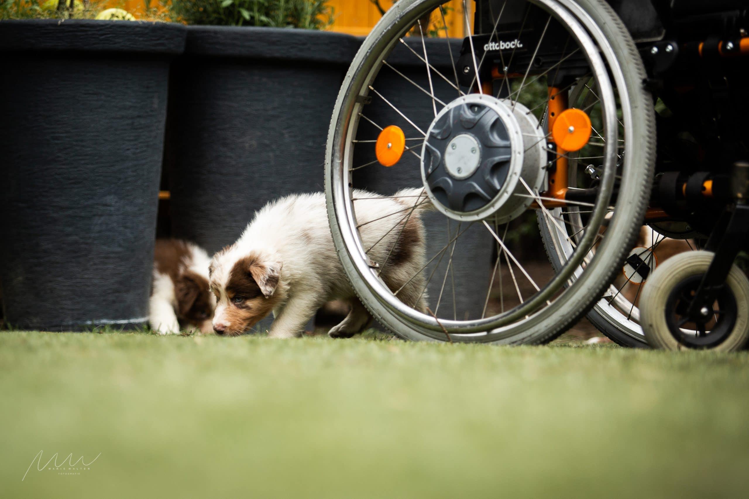 Handycap People zu Besuch Bild 1 - Einsatz als Therapiehund
