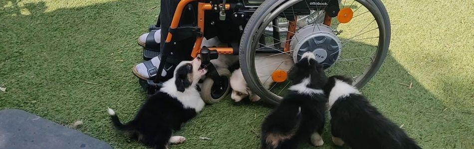 Phoebe-Kid-Welpen-Rollstuhlfahrer-Beitragsbild.jpg