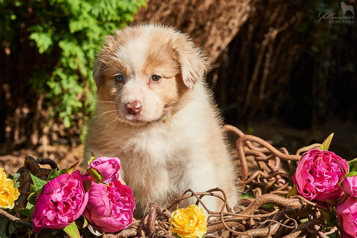 Maggy Jeff Bella bildW3 - Auswirkung der Fellfarbe des Hundes auf das Verhalten
