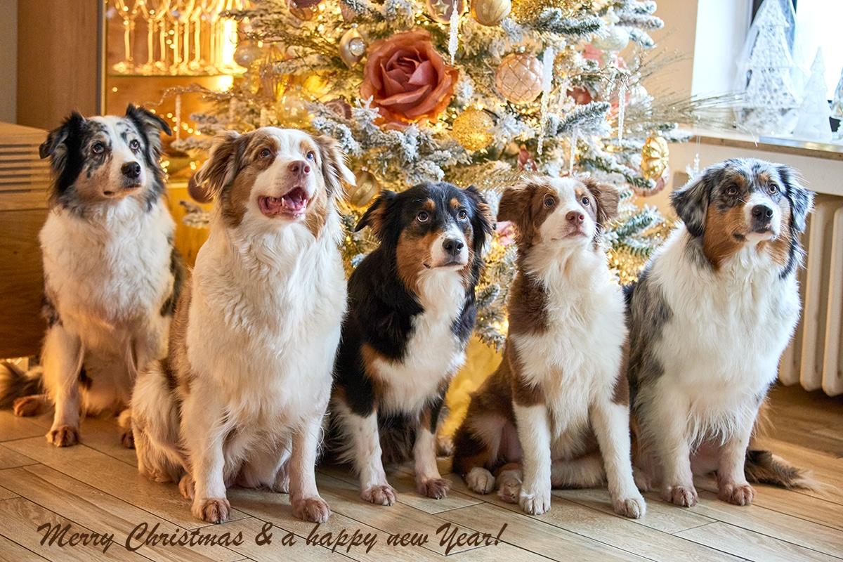 Frohe Weihnachten einen guten Rutsch ins neue Jahr Beitragsbild - Gefahren an Weihnachten