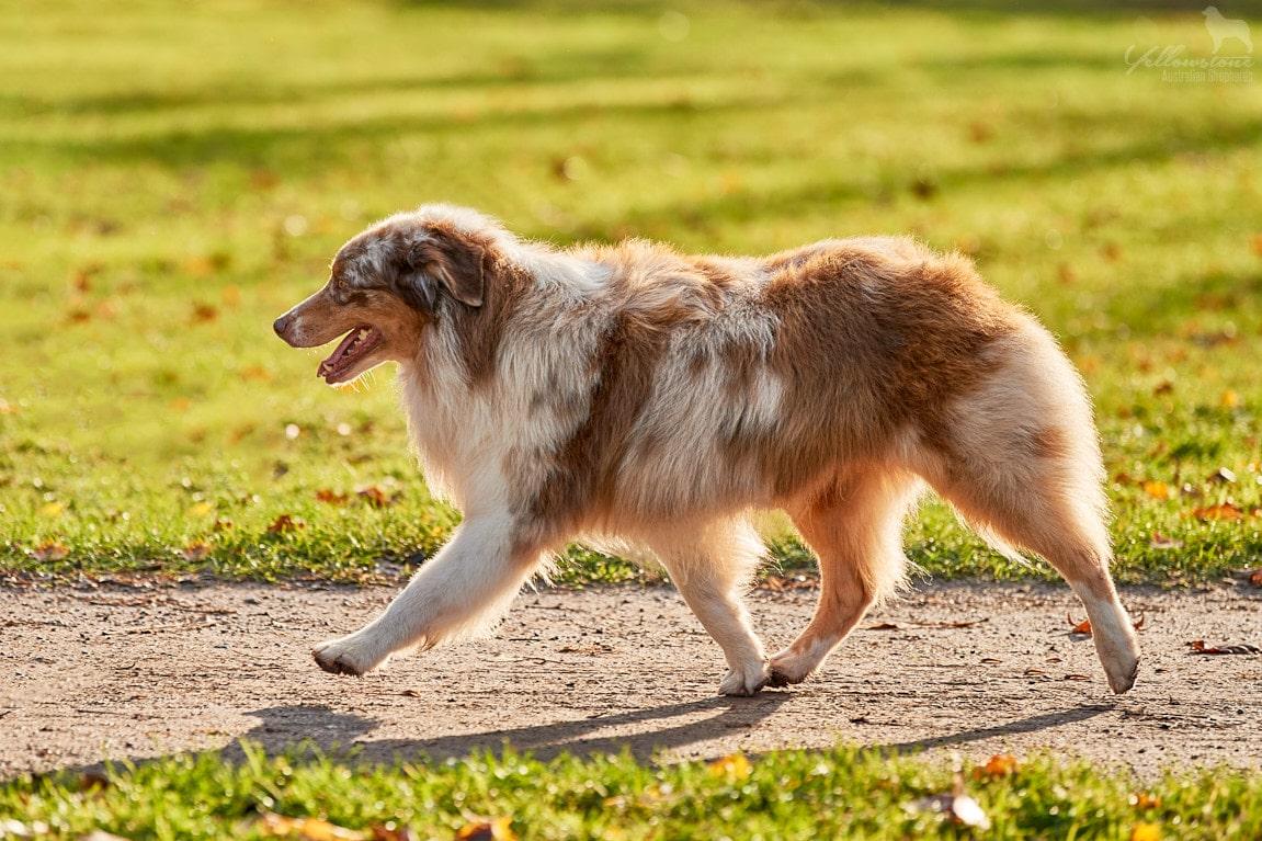 Jonah ub5 6 - Degenerative Myelopathien bei Hunden