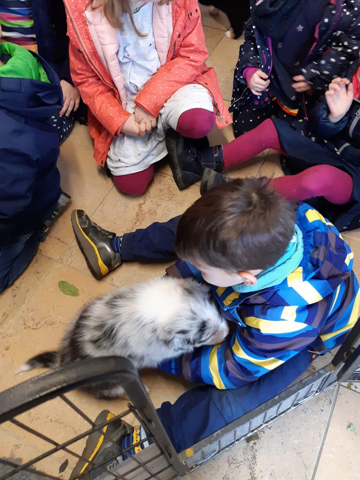 Seven Henry Welpen Kinder volle Dröhnung Bild 6 - Einsatz als Therapiehund