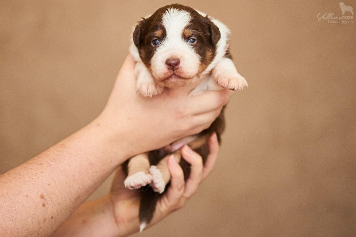 Seven Henry Milo bildW2 1 - Auswirkung der Fellfarbe des Hundes auf das Verhalten