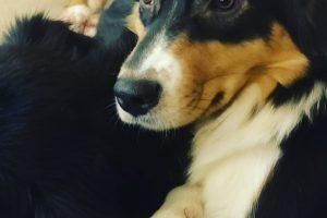 Ein paar Bilder unserer Hunde Bild 1 300x200 - Infos