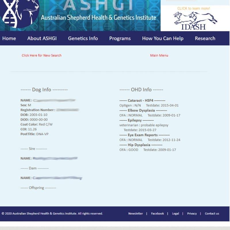 health data base search result einzelner hund 800x800 - ASHGI IDASH Anleitung - Wie trage ich meinen erkrankten Aussie ein?