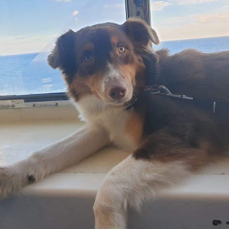 764c2097 0668 4e62 9c1f 03ae1751d299 800x800 - Hund nach Schweden importieren