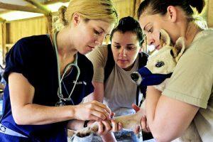 Tierarzt Behandlung