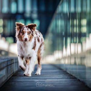 Maisy Cisco 2 Welpen Jule Bild 6 300x300 - Maisy & Cisco 2 Welpen: Jule