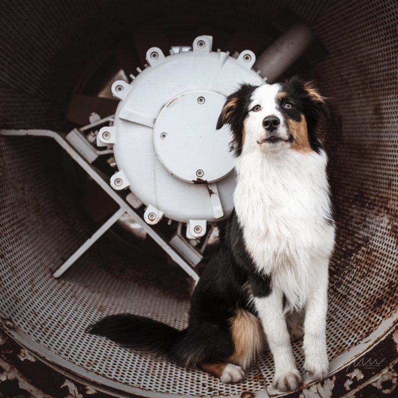 Phoebe Kid Welpen Kaya Bild 3 800x800 - Einsatz als Therapiehund
