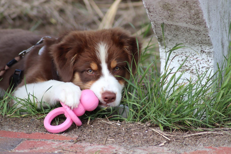 c4d3e80f 9381 4359 92c5 77780a1ce7ee - Giftige Lebensmittel & Pflanzen für Hunde
