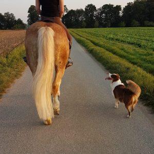 Polly auf dem Pferd Bild 2 300x300 - Polly auf dem Pferd