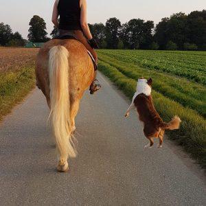 Polly auf dem Pferd Bild 3 300x300 - Polly auf dem Pferd